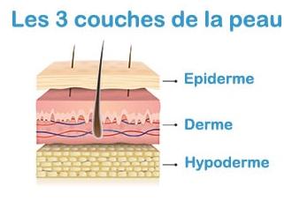3 couches de la peau